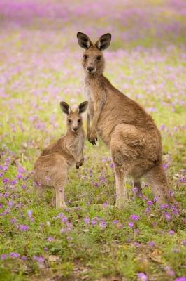 australian baby shower