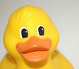 plastic rubber ducky